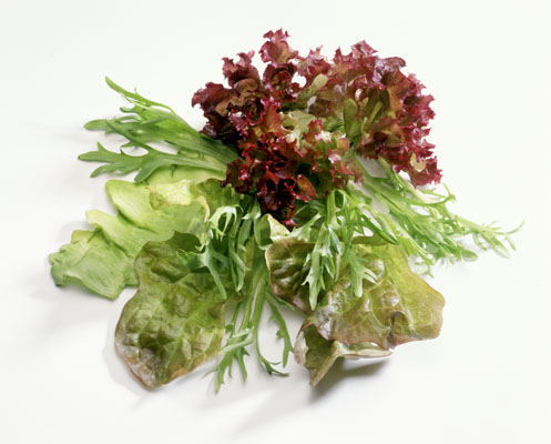 Lettuce (All Varieties)