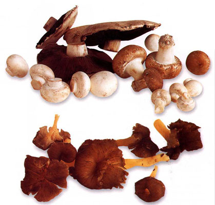 Mushrooms (All Varieties)
